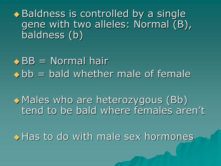 Baldness is controlled by a single gene with two alleles: Normal (B), baldness (b)