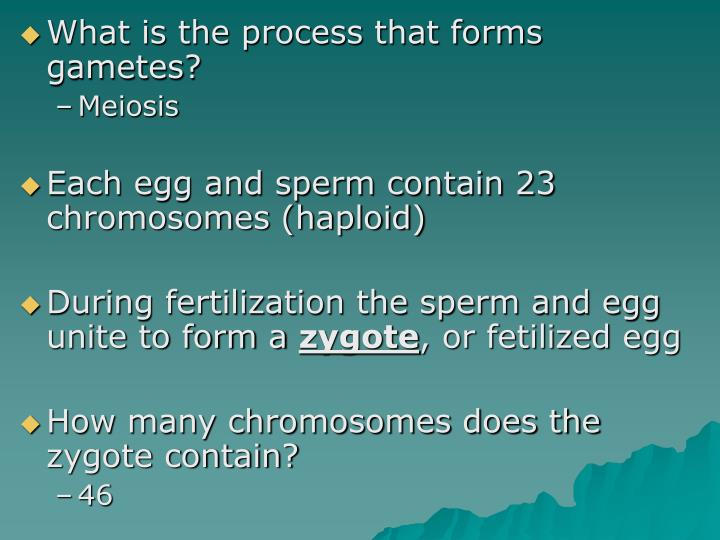 What is the process that forms gametes?