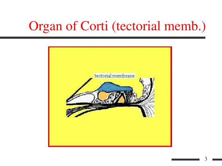 Organ of Corti (tectorial memb.)