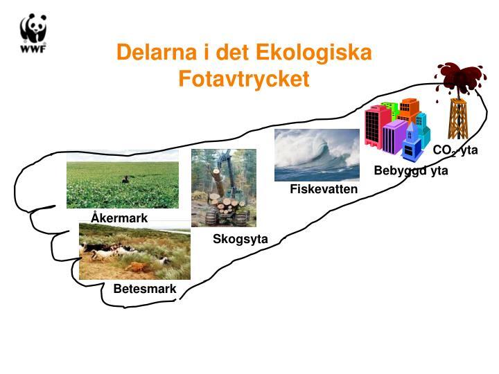 Delarna i det Ekologiska Fotavtrycket