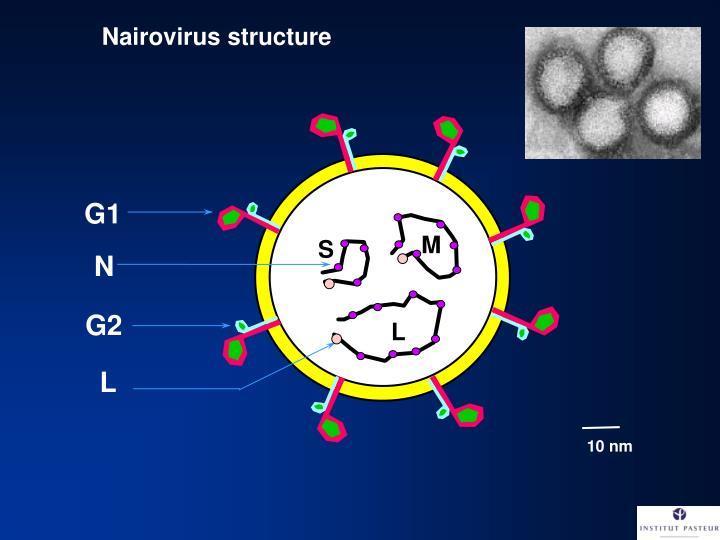 Nairovirus structure