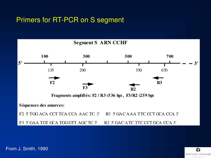 Primers for RT-PCR on S segment