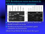pzt restriksiyon enzim incelemesi ile mikobakteri t rlerinin saptanmas