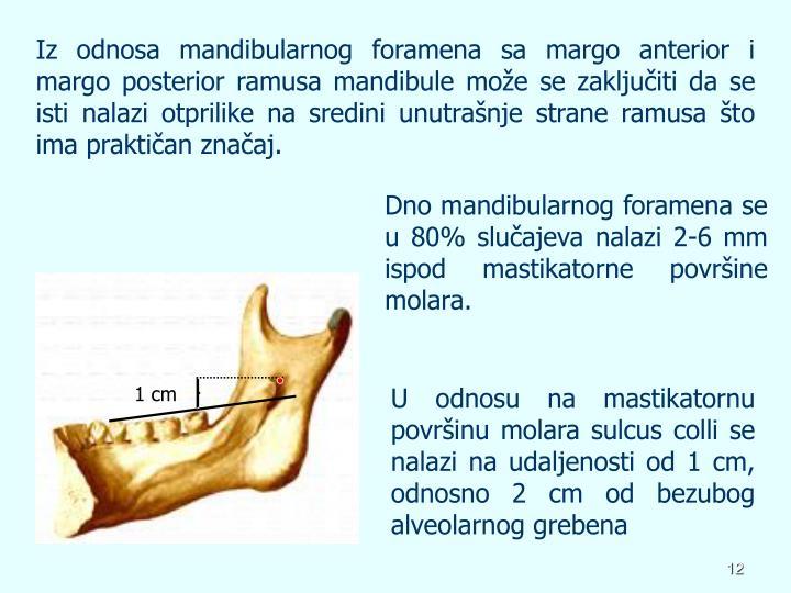 Iz odnosa mandibularnog foramena sa margo anterior i margo posterior ramusa mandibule može se zaključiti da se isti nalazi otprilike na sredini unutrašnje strane ramusa što ima praktičan značaj.