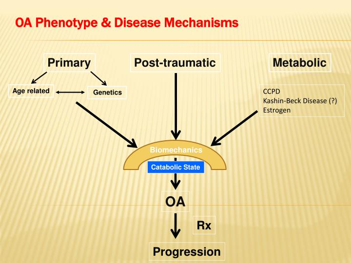 OA Phenotype & Disease Mechanisms