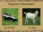 s ugetiere mammals11