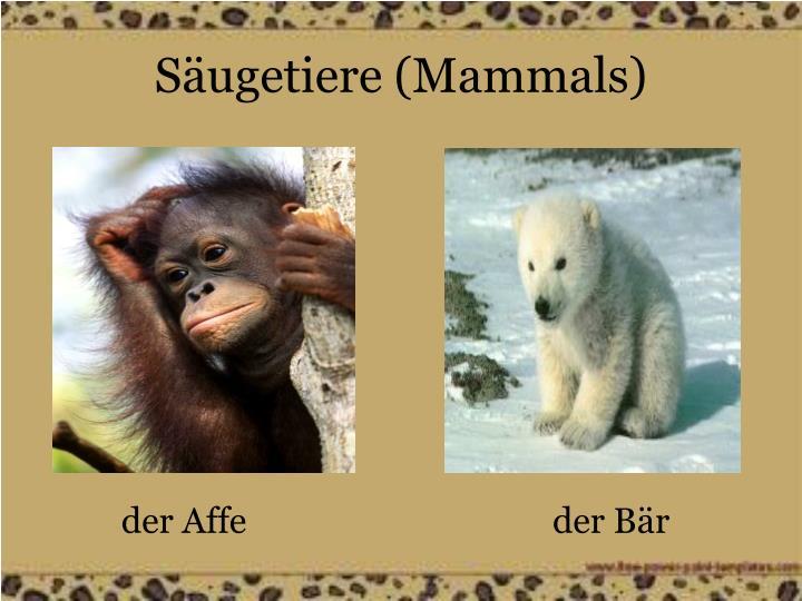 Säugetiere