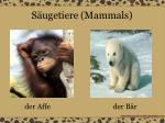 s ugetiere mammals3