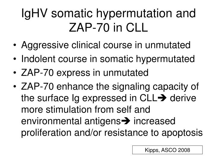 IgHV somatic hypermutation and ZAP-70 in CLL