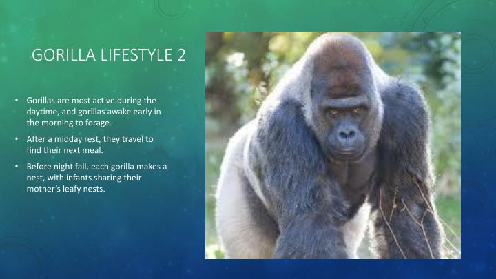 Gorilla lifestyle 2