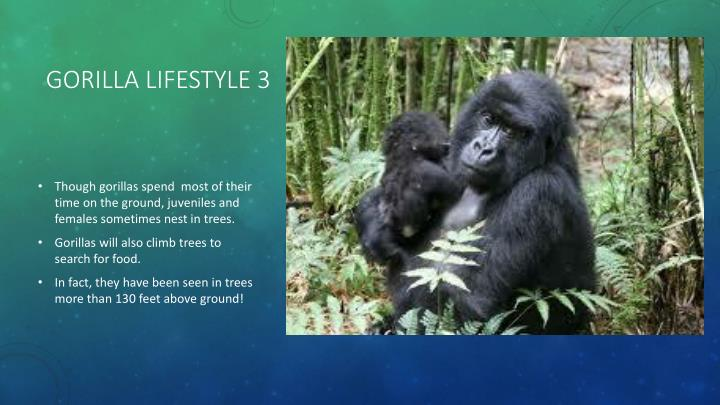 Gorilla lifestyle 3