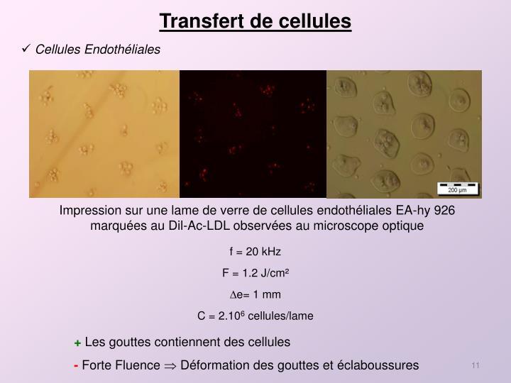 Transfert de cellules