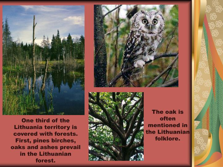 One third of the Lithuania territory is covered with forests. First, pines birches, oaks and ashes prevail in the Lithuanian forest.