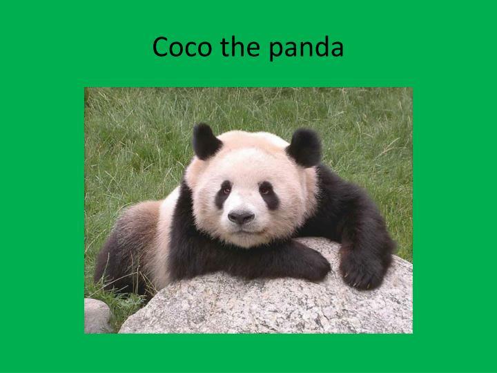 Coco the panda