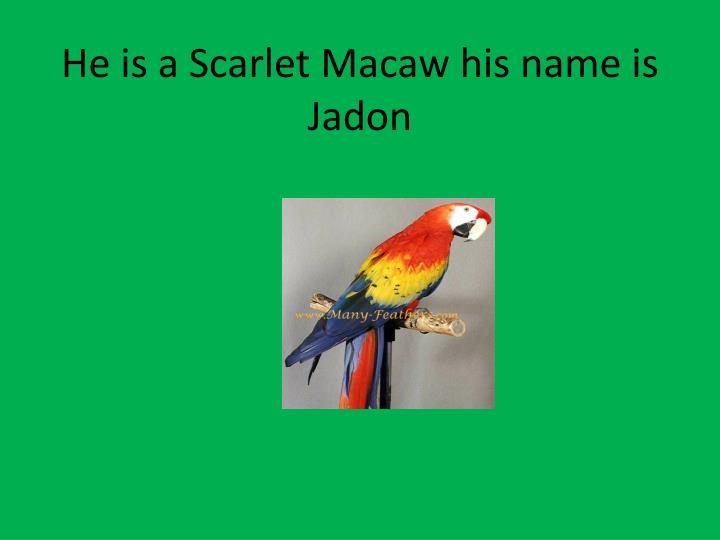 He is a Scarlet Macaw his name is