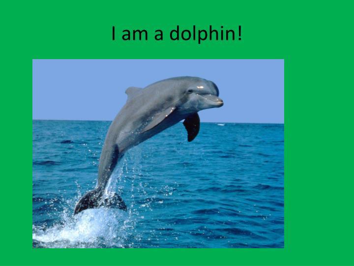 I am a dolphin!