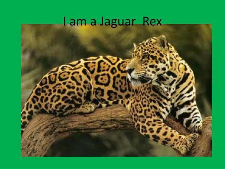 I am a Jaguar  Rex