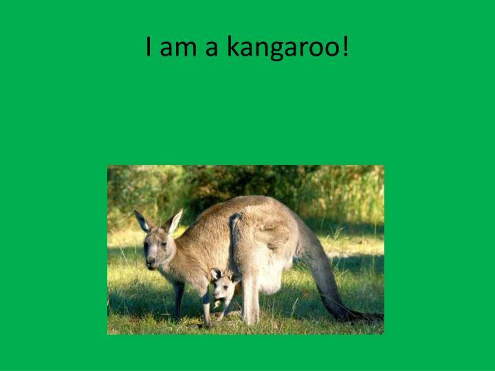 I am a kangaroo!