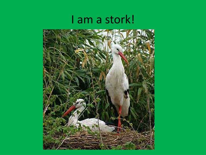 I am a stork!