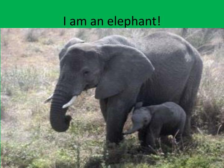 I am an elephant!
