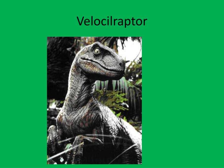 Velocilraptor