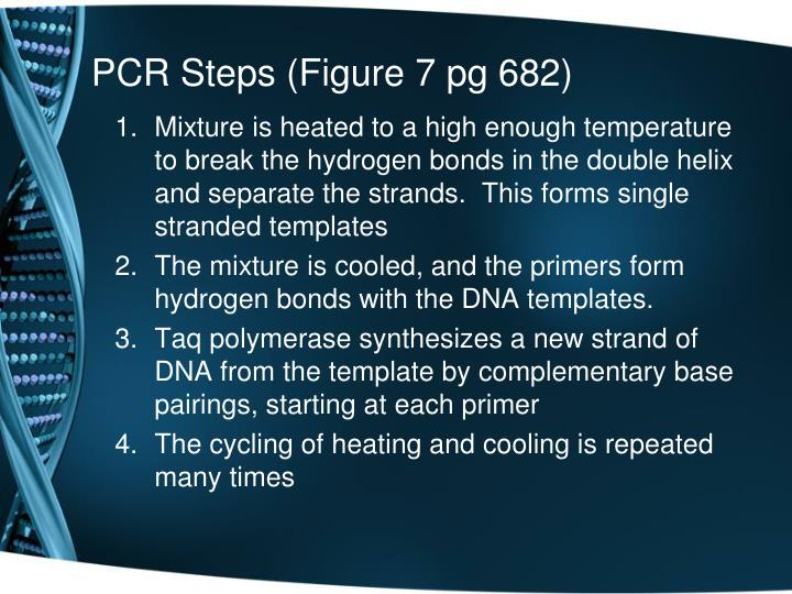 PCR Steps (Figure 7 pg 682)