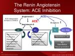 the renin angiotensin system ace inhibition