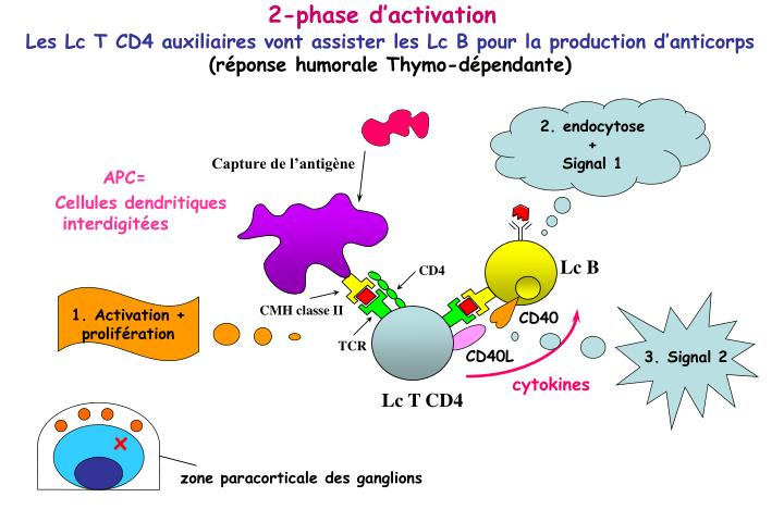 2-phase d'activation