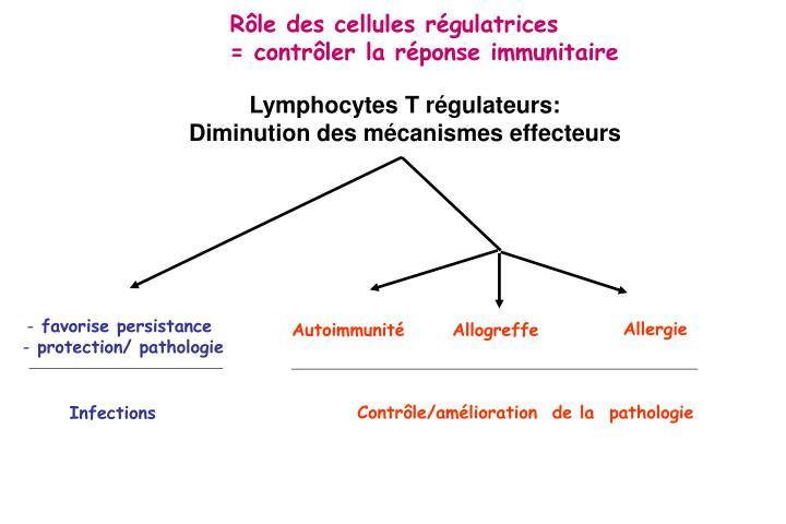Rôle des cellules régulatrices