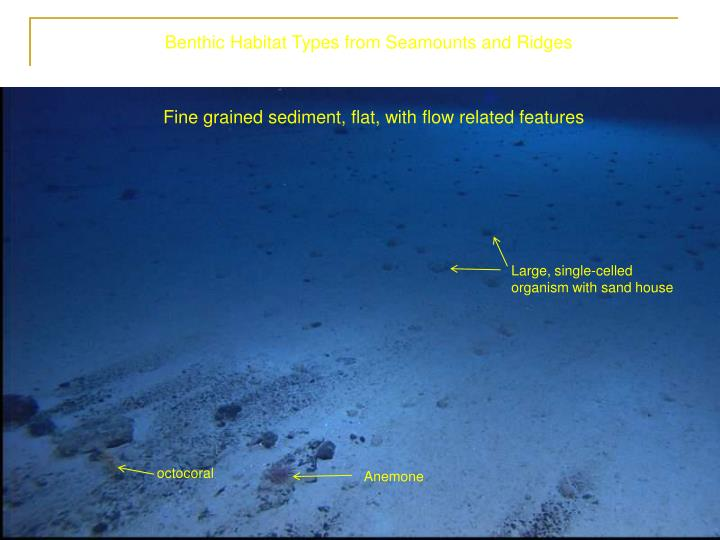 Benthic Habitat Types from Seamounts and Ridges