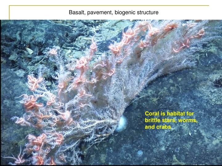 Basalt, pavement, biogenic structure