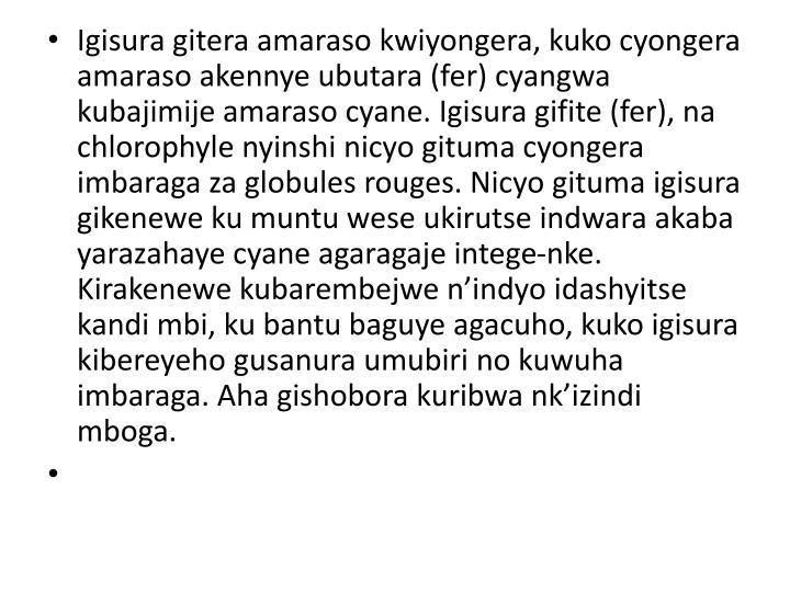 Igisura gitera amaraso kwiyongera, kuko cyongera amaraso akennye ubutara (fer) cyangwa kubajimije amaraso cyane. Igisura gifite (fer), na chlorophyle nyinshi nicyo gituma cyongera imbaraga za globules rouges. Nicyo gituma igisura gikenewe ku muntu wese ukirutse indwara akaba yarazahaye cyane agaragaje intege-nke. Kirakenewe kubarembejwe n'indyo idashyitse kandi mbi, ku bantu baguye agacuho, kuko igisura kibereyeho gusanura umubiri no kuwuha imbaraga. Aha gishobora kuribwa nk'izindi mboga.