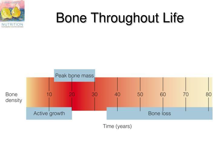 Bone Throughout Life