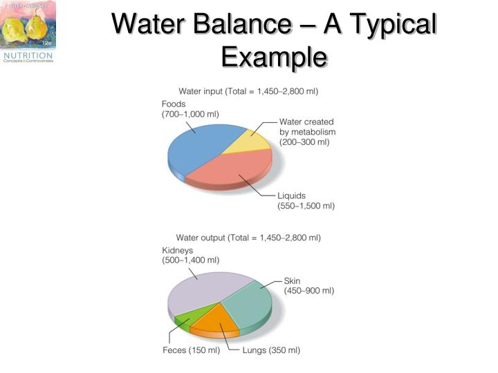 Water Balance – A Typical Example