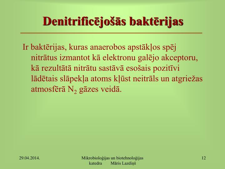 Denitrificējošās baktērijas