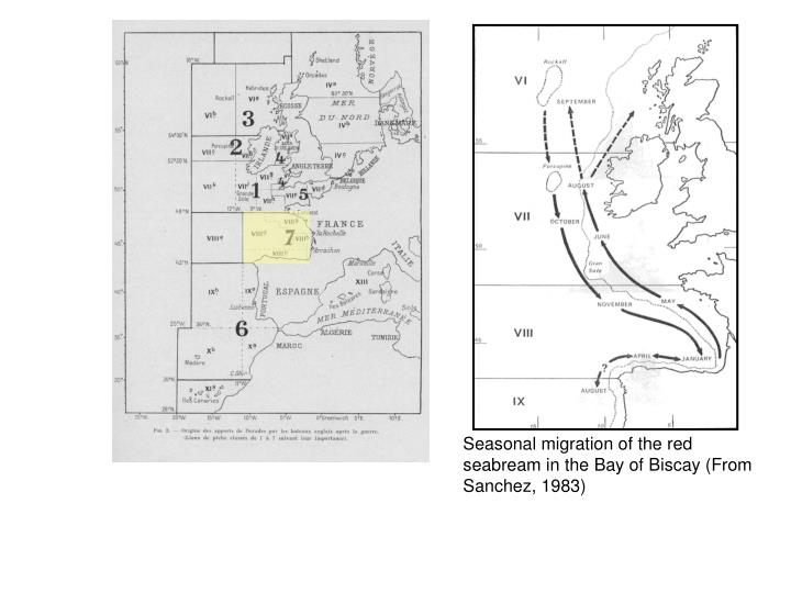 Seasonal migration of the red seabream in the Bay of Biscay (From Sanchez, 1983)