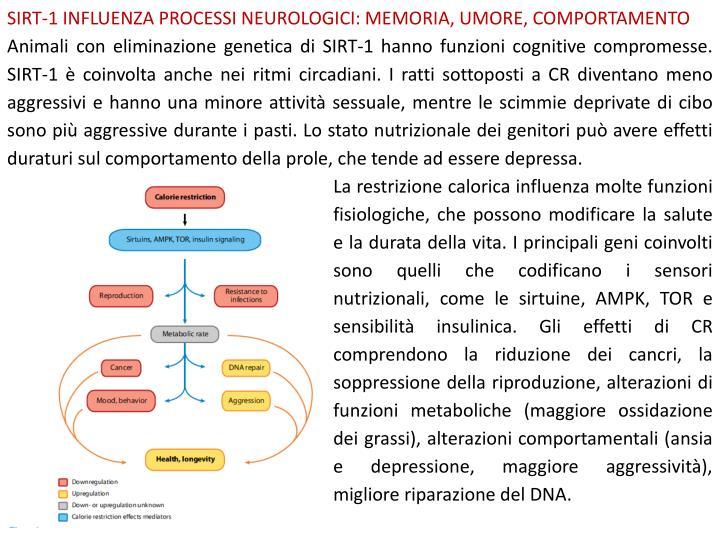 SIRT-1 INFLUENZA PROCESSI NEUROLOGICI: MEMORIA, UMORE, COMPORTAMENTO