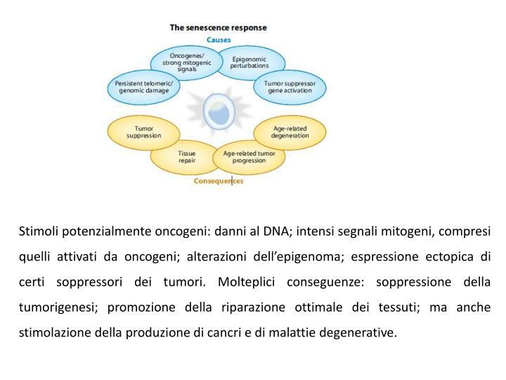 Stimoli potenzialmente oncogeni: danni al DNA; intensi segnali