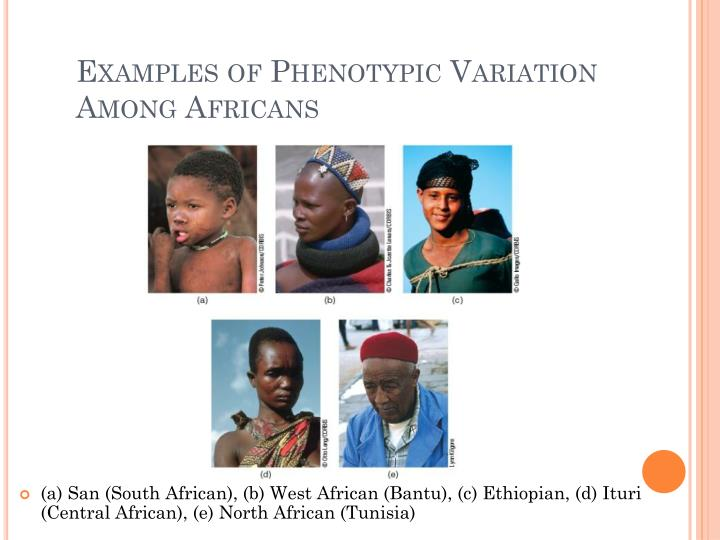 Examples of Phenotypic Variation Among Africans