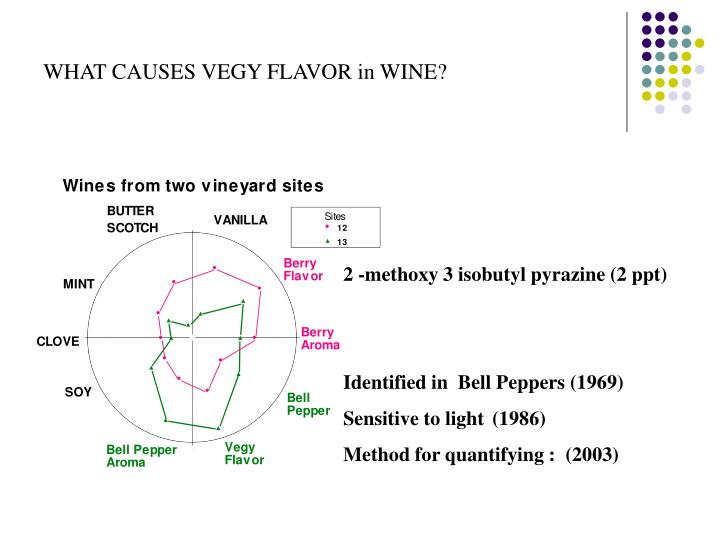 WHAT CAUSES VEGY FLAVOR in WINE?