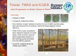trieste twas and icgeb joint programme on abiotic stress in plants