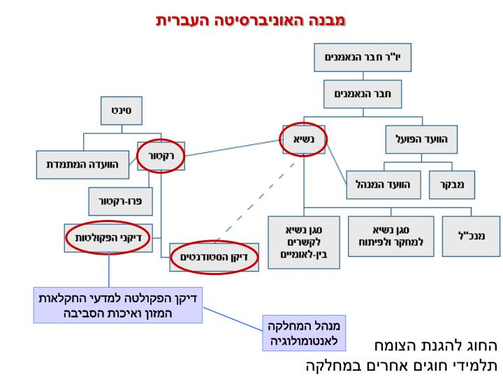 מבנה האוניברסיטה העברית