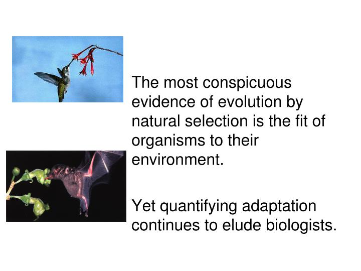 The most conspicuous evidence of evolution by natural selection is the fit of organisms to their en...