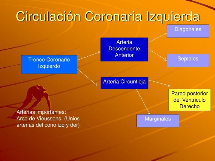 Circulación Coronaria Izquierda