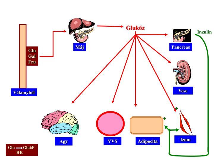 Glukóz
