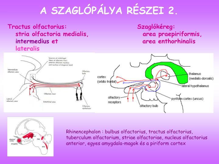 A SZAGLÓPÁLYA RÉSZEI 2.