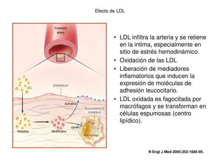 Efecto de LDL