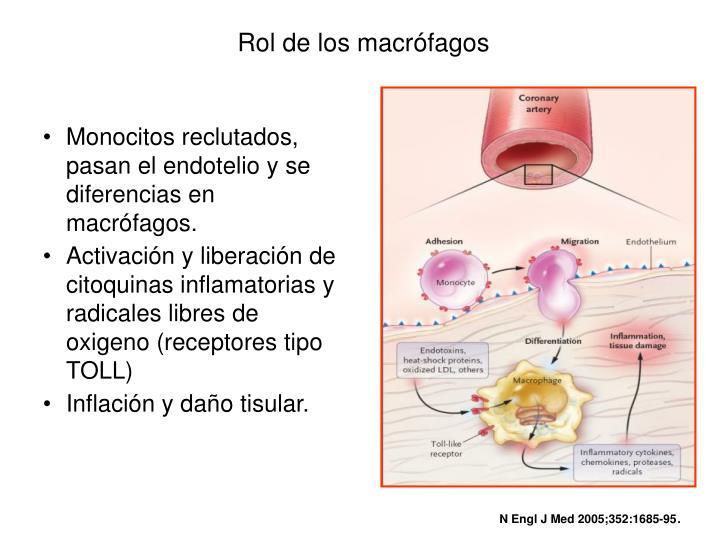Rol de los macrófagos