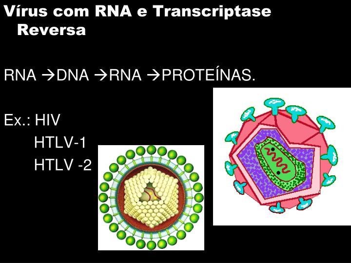 Vírus com RNA e Transcriptase Reversa