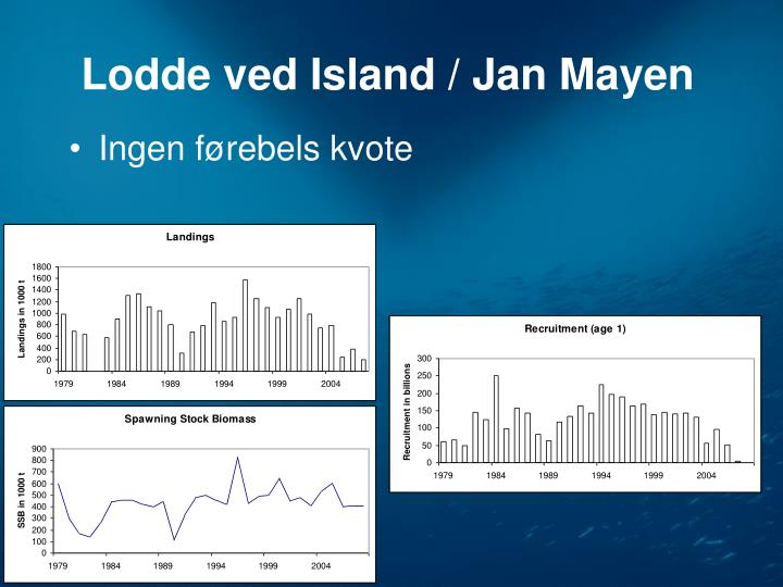 Lodde ved Island / Jan Mayen